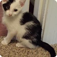 Adopt A Pet :: Harlie - Little Rock, AR