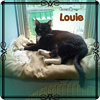 Adopt A Pet :: Louie - New Richmond,, WI