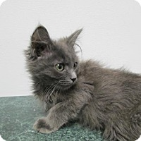 Adopt A Pet :: Zane - Oxford, NY