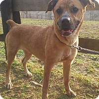 Adopt A Pet :: Willow - Louisville, KY