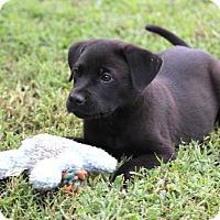 Adopt A Pet :: *Coogan - PENDING - Westport, CT