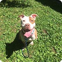 Adopt A Pet :: Cara in CT - East Hartford, CT