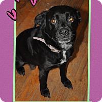 Adopt A Pet :: Petunia (Cw) - Harrisonburg, VA