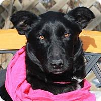 Adopt A Pet :: Lulu - Garfield Heights, OH