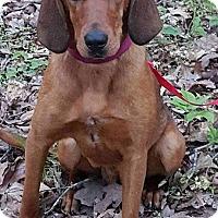 Adopt A Pet :: Bessie-in CT - Manchester, CT