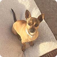 Adopt A Pet :: Suzy - Las Vegas, NV