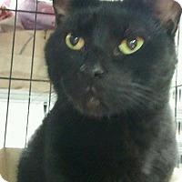 Adopt A Pet :: Minka - Trevose, PA