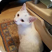 Adopt A Pet :: Frosty - Fairfax, VA