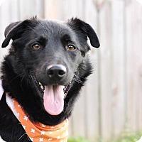 German Shepherd Dog/Labrador Retriever Mix Dog for adoption in Columbus, Ohio - Inky