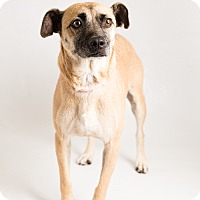 Adopt A Pet :: Buster - Hendersonville, NC