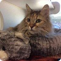 Adopt A Pet :: ARIANA - Olivette, MO