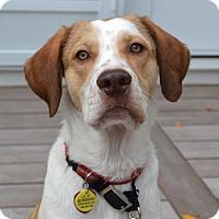 Adopt A Pet :: *Cypress - PENDING - Westport, CT