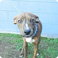 Adopt A Pet :: Bubbles - Randleman, NC