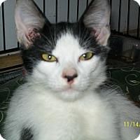 Adopt A Pet :: Napoleon - Mexia, TX