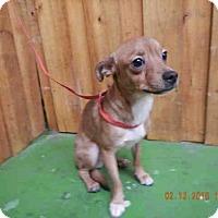 Adopt A Pet :: *TERRY - Ocala, FL