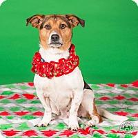 Adopt A Pet :: Bells - Northbrook, IL