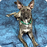 Adopt A Pet :: Blake - Joliet, IL
