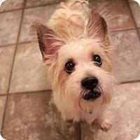 Adopt A Pet :: Pluto - New York, NY