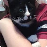 Adopt A Pet :: BANDIT - Lawton, OK