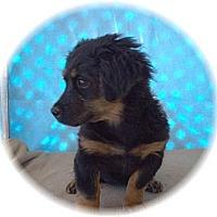 Adopt A Pet :: Noel - Tucson, AZ