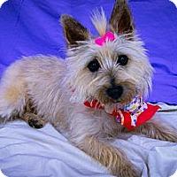 Adopt A Pet :: Tinka - Princeton, KY