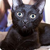 Adopt A Pet :: Binks - Irvine, CA