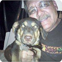Adopt A Pet :: JJ - Wedowee, AL