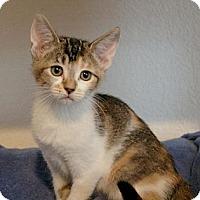 Adopt A Pet :: Lizzie - Sacramento, CA