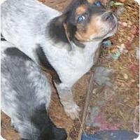 Adopt A Pet :: Rowdy - Katy, TX