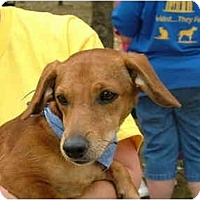 Adopt A Pet :: Rusty - Glastonbury, CT