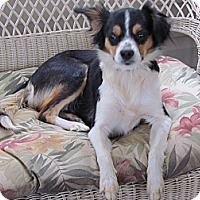 Adopt A Pet :: Mia - Braintree, MA