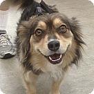 Adopt A Pet :: Lady