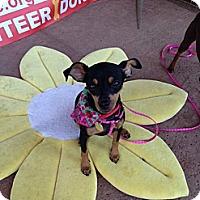 Adopt A Pet :: Sachi - Oceanside, CA