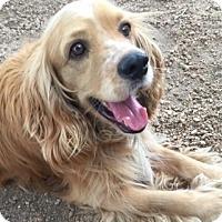 Adopt A Pet :: Kilmer - Sugarland, TX