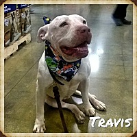 Adopt A Pet :: Travis - Arcadia, CA
