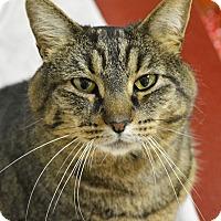 Adopt A Pet :: Maxine - Springfield, IL