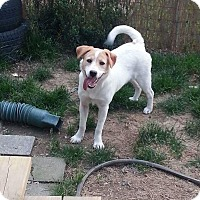 Adopt A Pet :: Nova - Hanover, PA