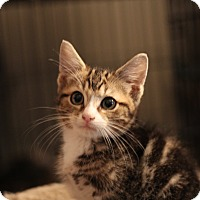 Adopt A Pet :: Hemmy - Richmond, VA