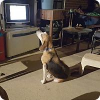 Adopt A Pet :: Rosie - Byhalia, MS