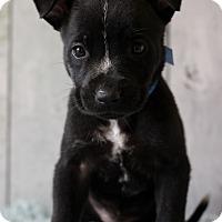 Adopt A Pet :: Hayes - Waldorf, MD