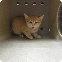Adopt A Pet :: FERAL JANE - Reno, NV