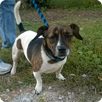 Adopt A Pet :: SHORTY - Terre Haute, IN