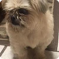 Adopt A Pet :: Maddie girl - Quinlan, TX