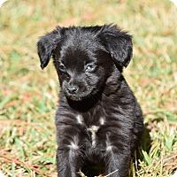 Adopt A Pet :: Bart - Groton, MA
