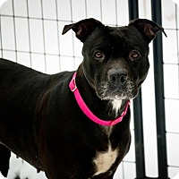 Adopt A Pet :: Juliet - Huntington, NY