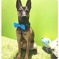 Adopt A Pet :: Johnny - Castro Valley, CA