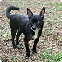 Adopt A Pet :: Love Bug - Lufkin, TX