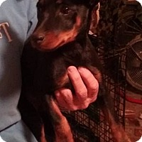 Adopt A Pet :: Bena - Palmdale, CA