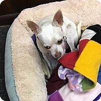 Adopt A Pet :: Spot - Tavares, FL