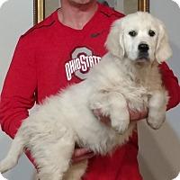Adopt A Pet :: Max - Gahanna, OH